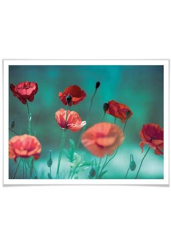Wall-Art Poster »Mohn Aquamarin«, Pflanzen, (1 St.) kaufen