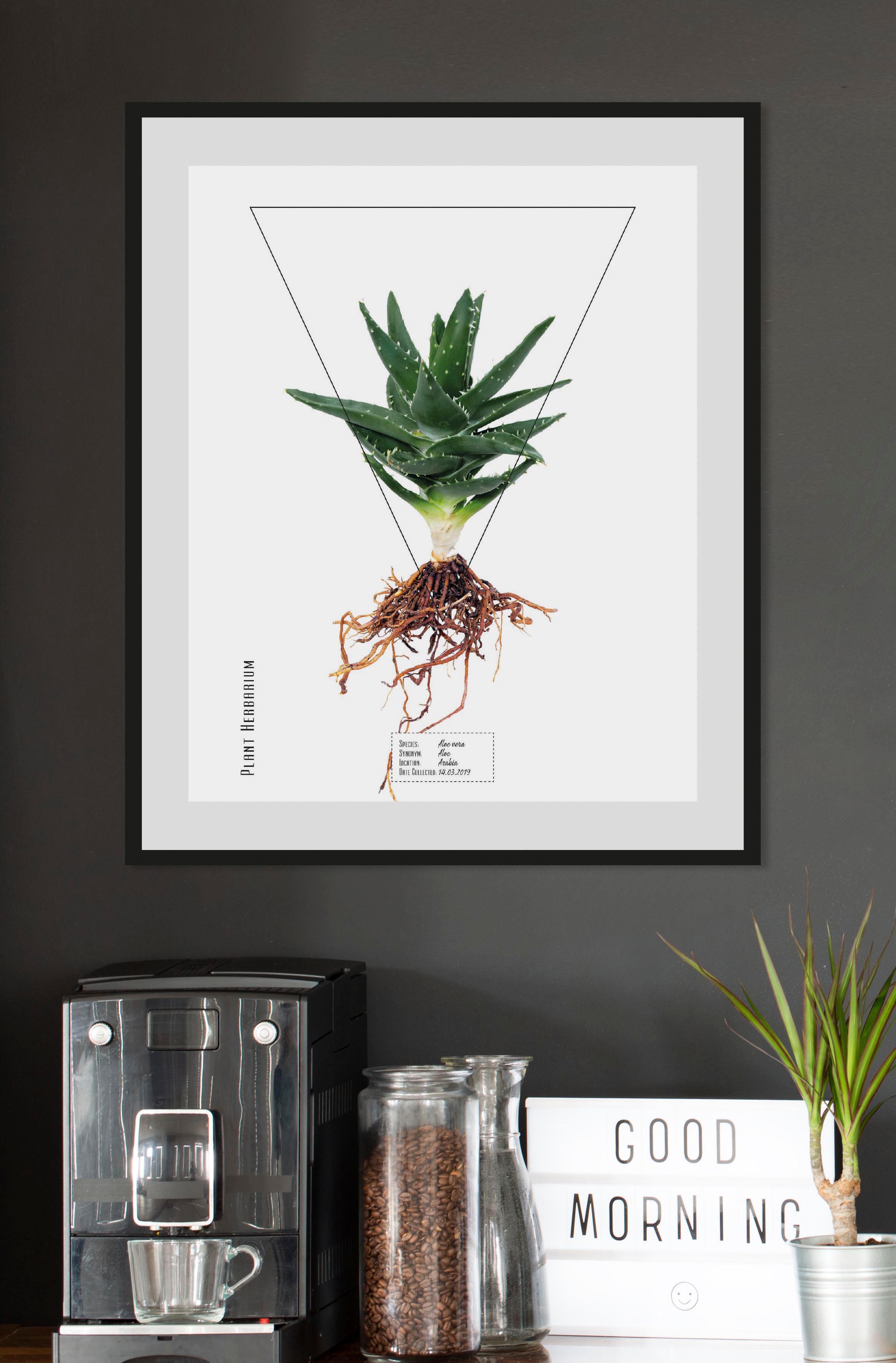Image of andas Bild »Pflanze«