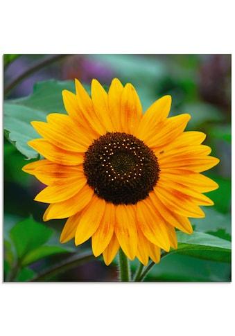 Artland Glasbild »Sonnenblume«, Blumen, (1 St.) kaufen