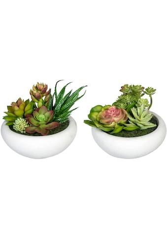 Creativ green Künstliche Zimmerpflanze »Sukkulentenarrangement« (2 Stück) kaufen