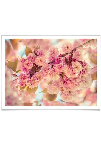 Wall-Art Poster »Kirschblüten«, Natur, (1 St.) kaufen