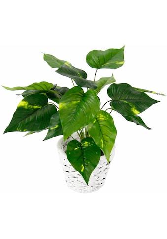 Kunstpflanze »Pothospflanze in Wasserhyazinthentopf« kaufen