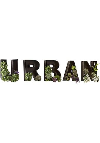 "Schneider Wandbild »Schriftzug ""Urban""«, Wanddeko kaufen"