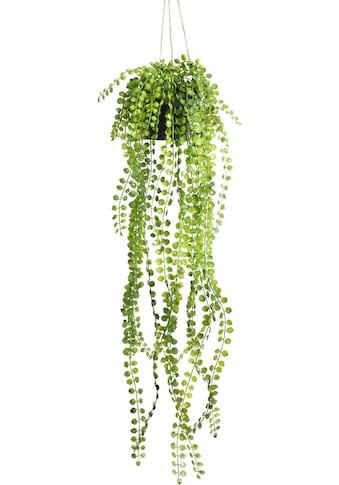 Botanic-Haus Künstliche Zimmerpflanze »Ficus-Pumila-Hängeampel« kaufen