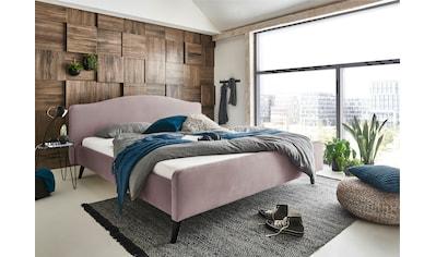 ATLANTIC home collection Polsterbett »Tamiga«, mit Massivholzfüsse kaufen