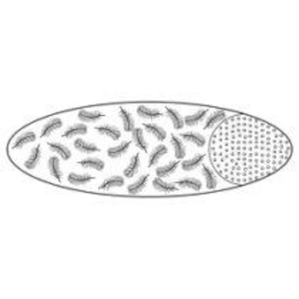 billerbeck Bauchschläferkissen »Bari«, Füllung: Ruhezone: 30% neue Gänsedaunen, weiss, 70% Federchen, VSB-Norm                Stützzone: 100% Polyester, Faserbällchen, Bezug: 100% Baumwolle, (1 St.)