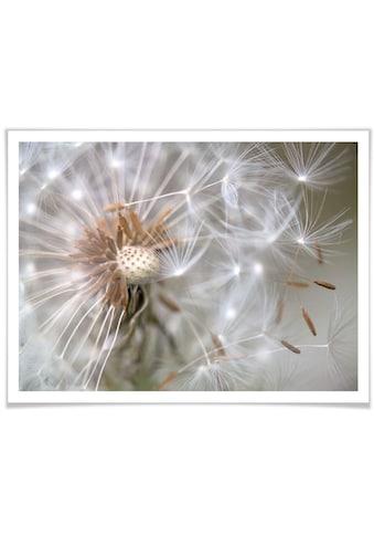 Wall-Art Poster »Pusteblume im Flug«, Blumen, (1 St.) kaufen