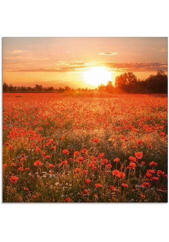 Artland Glasbild »Mohnblumenfeld bei Sonnenuntergang«, Blumen, (1 St.) kaufen