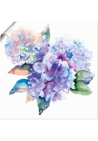 Artland Wandbild »Hortensien« kaufen