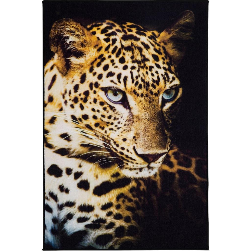 Andiamo Teppich »Leopard«, rechteckig, 4 mm Höhe