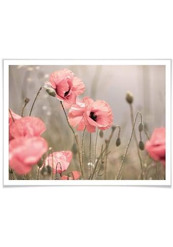 Wall-Art Poster »Romantische Mohnblume«, Blumen, (1 St.) kaufen