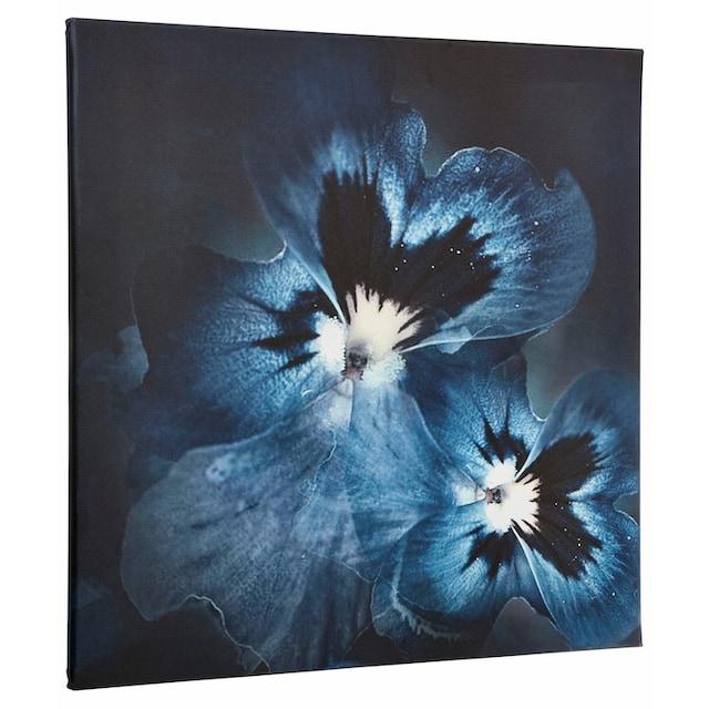 Guido Maria Kretschmer Home&Living Leinwandbild »Viola Flower«