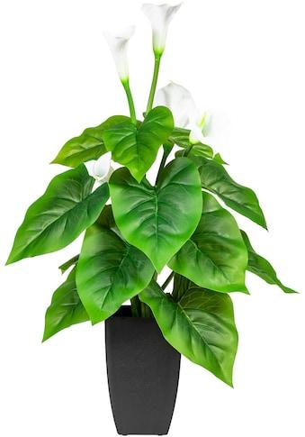 DELAVITA Künstliche Zimmerpflanze »Salzach« kaufen