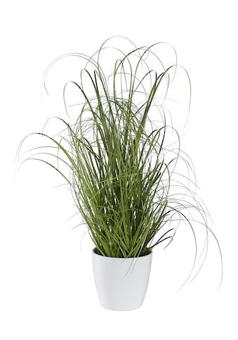 Deko-Pflanze kaufen