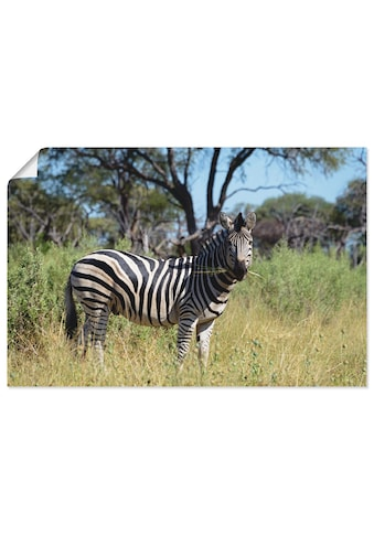 Artland Wandbild »Steppenzebra« kaufen