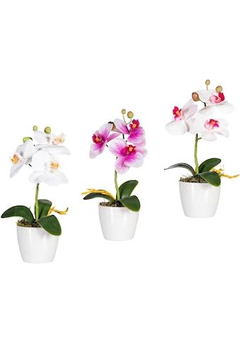 Creativ green Kunstorchidee »Phalaenopsis« (Set, 3 Stück) acheter