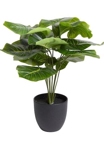 Botanic-Haus Künstliche Zimmerpflanze »Alocasia« kaufen