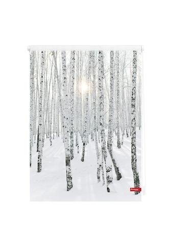 LICHTBLICK Seitenzugrollo »Klemmfix Motiv Birkenwald«, Lichtschutz, ohne Bohren, freihängend, bedruckt kaufen