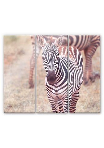 Wall - Art Mehrteilige Bilder »Zebra Fohlen Pferd (3 - teilig)« (Set) kaufen