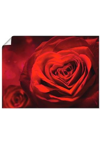 Artland Wandbild »Valentinseinladung mit Herzen und Rosen«, Blumen, (1 St.), in vielen Grössen & Produktarten - Alubild / Outdoorbild für den Aussenbereich, Leinwandbild, Poster, Wandaufkleber / Wandtattoo auch für Badezimmer geeignet kaufen
