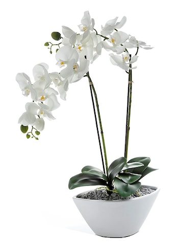 Creativ green Kunstpflanze »Orchidee« (1 Stück) kaufen