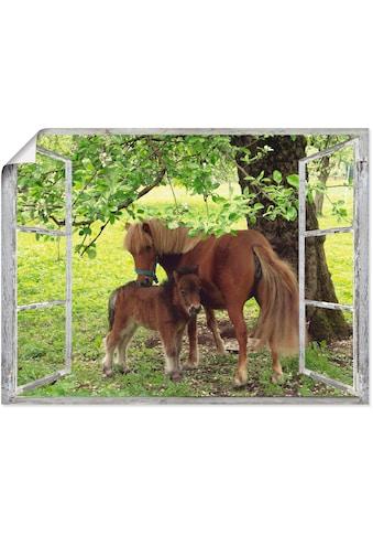 Artland Wandbild »Fensterblick - Pony mit Kind«, Haustiere, (1 St.), in vielen Grössen & Produktarten - Alubild / Outdoorbild für den Aussenbereich, Leinwandbild, Poster, Wandaufkleber / Wandtattoo auch für Badezimmer geeignet kaufen