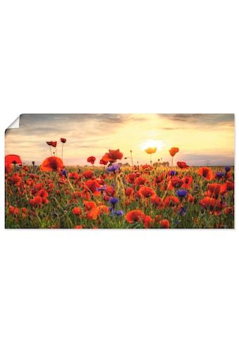 Artland Wandbild »Mohnblumen«, Blumen, (1 St.), in vielen Grössen & Produktarten - Alubild / Outdoorbild für den Aussenbereich, Leinwandbild, Poster, Wandaufkleber / Wandtattoo auch für Badezimmer geeignet kaufen