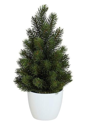 Creativ green Kunstpflanze »Tannenbaum« (2 Stück) kaufen