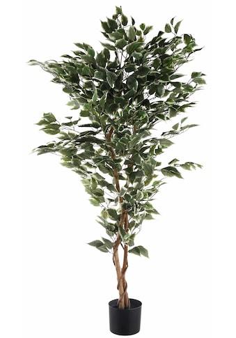 Creativ green Kunstpflanze »Ficus Benjamini« kaufen