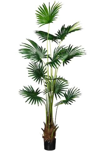 Creativ green Kunstpalme »Fächerpalme« (1 Stück) kaufen