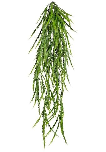 Creativ green Kunstpflanze »Asplenium - Hänger« (1 Stück) kaufen