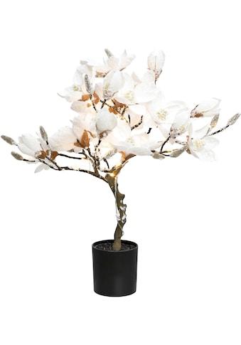 Creativ deco LED Baum »Magnolie«, Warmweiss, beschneit, Höhe ca. 58 cm, mit 20 LEDs kaufen