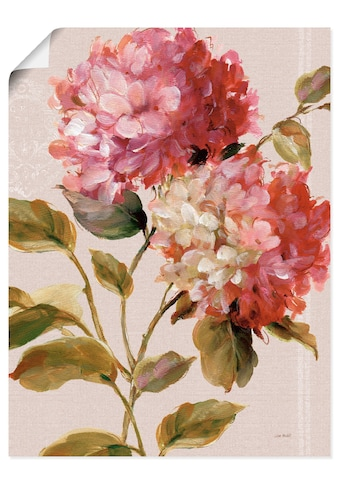 Artland Wandbild »Harmonische Hortensien« kaufen