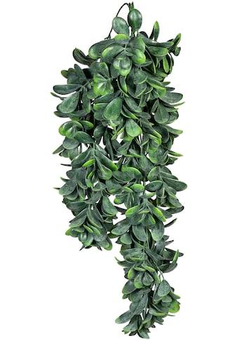 Creativ green Kunstranke »Blatthänger« kaufen