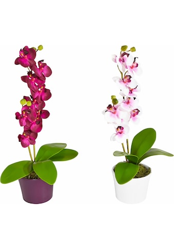 Creativ green Kunstpflanze, im Keramiktopf, 2er-Set kaufen