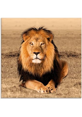 Artland Glasbild »Löwe«, Wildtiere, (1 St.) kaufen