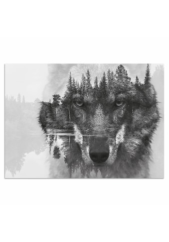 Home affaire Acrylglasbild »Wolf« kaufen