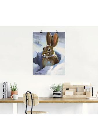 Artland Wandbild »Schneehase«, Wildtiere, (1 St.) kaufen