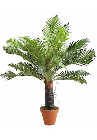 Creativ green Kunstpalme »Baumfarn« (1 Stück) kaufen