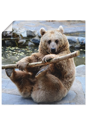 Artland Wandbild »Bär II«, Wildtiere, (1 St.) kaufen