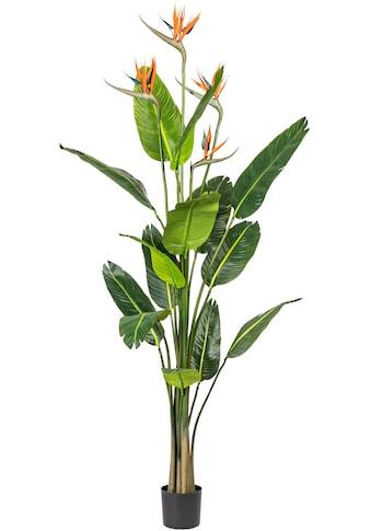 Home affaire Künstliche Zimmerpflanze »Oteley« kaufen