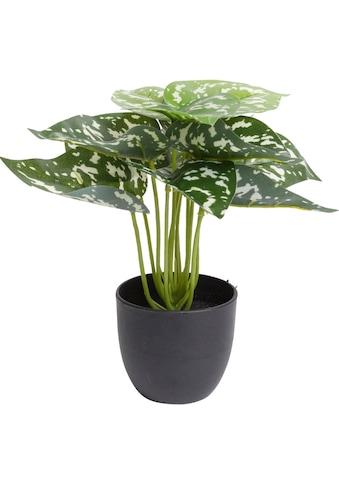 Botanic-Haus Künstliche Zimmerpflanze »Aglaonema« kaufen