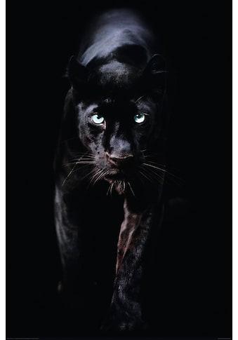 Reinders! Deco-Panel »Schwarzer Panther« kaufen