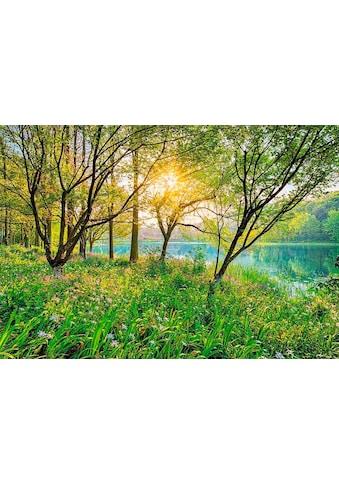 KOMAR Fototapete »Spring Lake« kaufen
