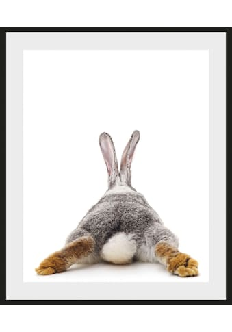 queence Bild »Bunny Tail«, Hase, (1 St.) kaufen