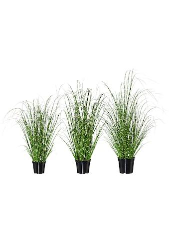 Creativ green Kunstpflanze »Miscanthus« (Set, 3 Stück) kaufen