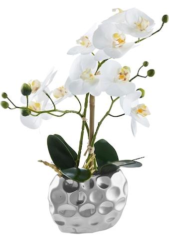 Kunstorchidee »Orchidee« (1 Stück) kaufen