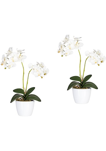Creativ green Kunstpflanze »Phalaenopsis« (Set, 2 Stück) kaufen