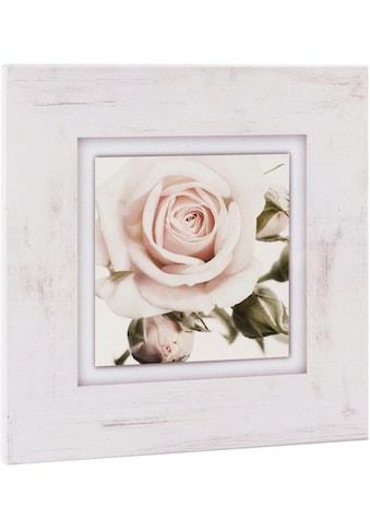Home affaire Holzbild »Hellrosa Rosenblüte« kaufen