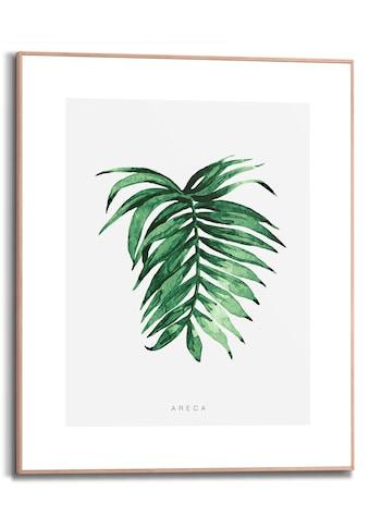 Reinders! Bild mit Rahmen »Areca Leaf«, (1 St.) kaufen